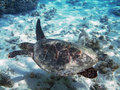 Turtle and coral reef Royalty Free Stock Photography