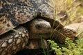 Turtle by feeding