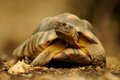 Turtle on the ground turtles belongs to oldest reptiles earth Royalty Free Stock Photos