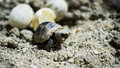 Turtle hatching Royalty Free Stock Photo
