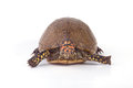 Turtle a isolated on a white background Royalty Free Stock Photos