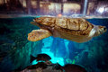 Turtle in istanbul aquarium large Stock Photos