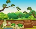 Turtle in the Open Zoo Royalty Free Stock Photo