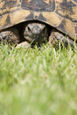 Turtle portrait Royalty Free Stock Images