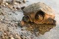 Turtle reflection Stock Photo