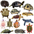 Turtle set Royalty Free Stock Photo