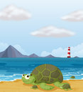 A turtle in the shore illustration of Royalty Free Stock Photo