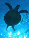 Turtle Sillhouette Royalty Free Stock Photo