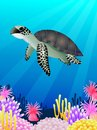 Turtle swimming in the ocean Royalty Free Stock Photos