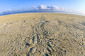 Turtle tracks on a beach, Heron Island, Queensland, Australia Royalty Free Stock Photo