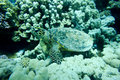 Turtle underwater at coral reef in the red sea egypt Stock Photography