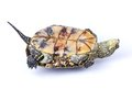 Turtle upside down Royalty Free Stock Photos