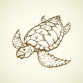 Turtle. Vector drawing Royalty Free Stock Photo