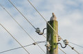Turtledove a sits perched on a power pole Royalty Free Stock Images