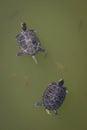 Turtles at botanical garden in zagreb Royalty Free Stock Images