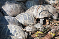 Turtles group of in the daylight Royalty Free Stock Photography