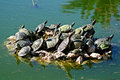 Turtles in a pond Royalty Free Stock Photos