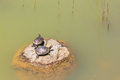 Turtles on rock when two cute sitting a Stock Photo