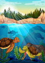 Turtles swimming under the ocean