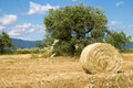 Tuscan countryside with a bale of hay and blue sky Royalty Free Stock Image