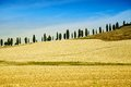 Tuscan Countryside with Cypress Trees in a Row Royalty Free Stock Photo