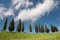 Tuscan cypress trees Royalty Free Stock Photo
