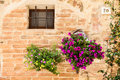 Tuscan flowers pienza tuscany region italy old wall with Royalty Free Stock Image