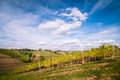 Tuscan grapevine countryside landscape Royalty Free Stock Images