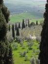 Tuscan hillside, Italy Royalty Free Stock Photo