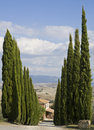 Tuscan Landscape, cypress near a street Stock Photos