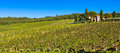 Tuscan panorama landscape with vineyards and a mansion on a hill Royalty Free Stock Photo
