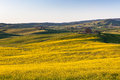 Tuscan val d orcia green and yellow fields view outdoor Royalty Free Stock Photos