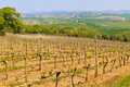 Tuscan vineyard near Montalcino Stock Photography