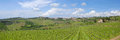 Tuscan vineyard panoramic landscape of vineyar with sun and clouds Royalty Free Stock Photography