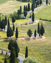 TUSCANY countryside, devious street with cypress Stock Images