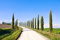 Tuscany, Cypress Trees road landscape, Italy. Stock Images
