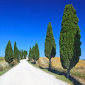 Tuscany, Cypress Trees white rural road. Italy Royalty Free Stock Image