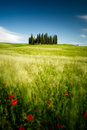 Tuscany fields in italy near san quirico d orcia Royalty Free Stock Photography