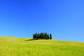 Tuscany forest cypress and field Stock Photography