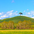 Tuscany, Green fields and lonely pine tree landscape, Siena, Italy. Royalty Free Stock Photo
