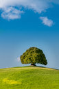 Tuscany italy landscape in lonely tree in a meadow Royalty Free Stock Photo