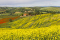 Tuscany landscape with blooming rapeseed near Siena, Italy Royalty Free Stock Photography