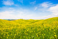 Tuscany landscape with field of flowers in val d orcia italy beautiful Stock Image