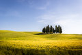 Tuscany, meadow field with cypress trees.