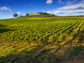 Tuscany vineyards countryside in the chianti region of italy Royalty Free Stock Images