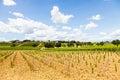 Tuscany wineyard italy region orcia valley a youg during a sunny day Royalty Free Stock Photos