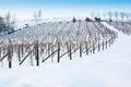Tuscany: wineyard in winter Stock Photography