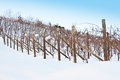 Tuscany: wineyard in winter Stock Images