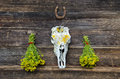 Tutsan bunches and horse cranium on old wooden wall fresh medical herbs with horseshoe farm Royalty Free Stock Photo