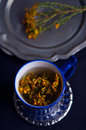 Tutsan herbal infusion and branch in blue cup Royalty Free Stock Images